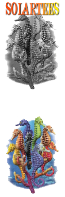 Solar Tees - the t-shirts that change colour in the sun
